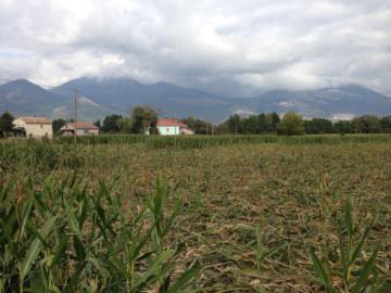 EMERGENZA CINGHIALI: PER L'ARA BASILICATA